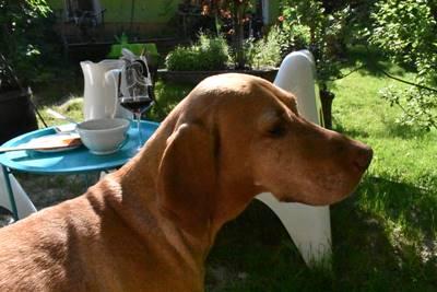 Bogrács kutya